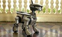 A-Sony-robot-dog--008.jpg