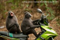 Monkey-Escape.jpg