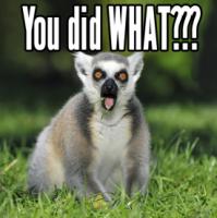 shocked-lemur-face.png