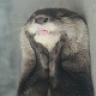 OtterLunacy