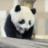 Angry__Panda