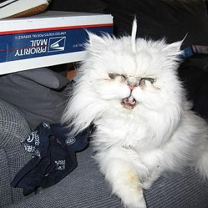 Scary Cat Pic