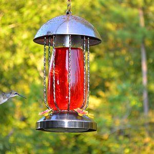 Hummingbird092511